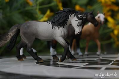 Pferdemodell auf Mosaiktisch - Blende 5
