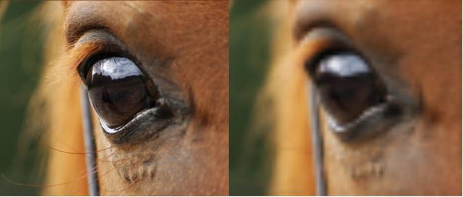 Pferdeauge - links hohe Auflösung, rechts geringe Auflösung --> das Bild wirkt unscharf, wenn man genau hinsieht erkennt man aber vor allem an der hellen Linie unter dem Auge, dass es pixelig ist