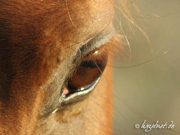 Pferdeauge fotografiert mit Polarisationsfilter - ein seltener Anblick