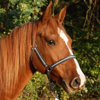 Gute Laune macht Laune – Pferdegesichter ganz unterschiedlich