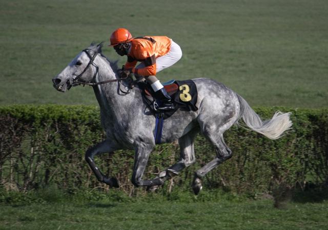 White Lightning (8-jähriger Hengt), der das 6. Rennen des Tages souverän gewinnt
