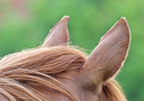 Im Bereich der Ohren ist die Auswahl nicht ganz detailgetreu, daher sollte hier nachgearbeitet werden!