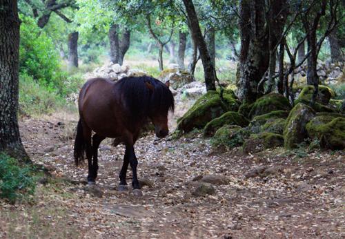 Auf den weichen Wege zwischen kleinen Korkeichen und bemoosten Steinen ist die Hitze des Sommers leichter zu ertragen...