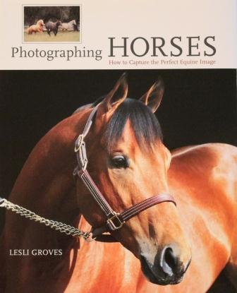 Photographing Horses - How to Capture the Perfect Equine Image